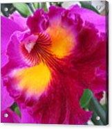 Hawaiian Orchid 2 Acrylic Print