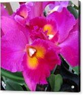 Hawaiian Orchid 3 Acrylic Print