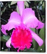 Hawaiian Orchid 33 Acrylic Print