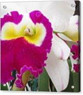 Hawaiian Orchid 4 Acrylic Print