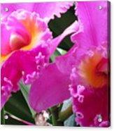 Hawaiian Orchid 6 Acrylic Print