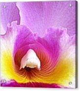 Hawaiian Orchid 9 Acrylic Print
