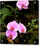 Hawaiian Orchids Acrylic Print