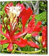 Hawaiian Royal Acrylic Print