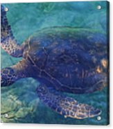 Hawaiian Sea Turtle Acrylic Print