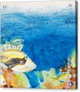 Hawaiian Triggerfish Acrylic Print