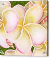 Hawaiian Tropical Plumeria Flower #483 Acrylic Print