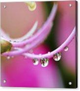 Hawaiin Rain Drops Acrylic Print