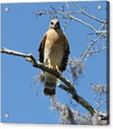 Hawk Eye Contact Acrylic Print
