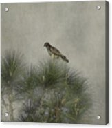 Hawk In The Treetop Acrylic Print