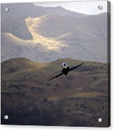 Hawk In The Welsh Mountains Acrylic Print