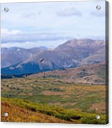 Hawk Soaring Over Guanella Pass In The Arapahoe National Forest Acrylic Print