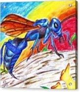 Hawk Wasp Acrylic Print