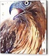 Hawk Watercolor Acrylic Print