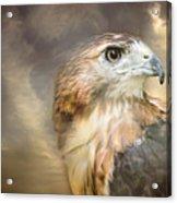 Hawkeyed Acrylic Print