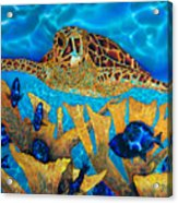 Hawksbill Sea  Turtle Acrylic Print