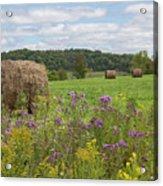 Hay Bales In Summer  Acrylic Print