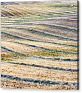 Hay Billows II Acrylic Print