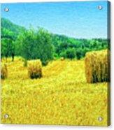 Hay Harvest In Tuscany Acrylic Print