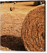Hay In The Field Acrylic Print