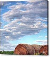 Hay It's Art Acrylic Print by JC Findley