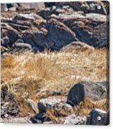 Hay Ocean Rocks Acrylic Print