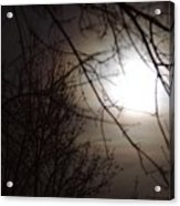 Hazy Moon Through The Trees Acrylic Print
