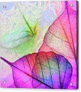 Hc0268 Acrylic Print
