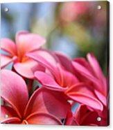 He Pua Lahaole Ulu Wehi Aloha Acrylic Print