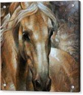 Head Horse 2 Acrylic Print