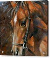 Head Horse Acrylic Print