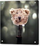 Head Of A Teddy Acrylic Print by Joana Kruse