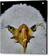 Head Of An Eagle  Acrylic Print