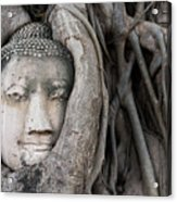Head Of Buddha Statue In The Tree Roots Acrylic Print