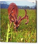 Headshot Acrylic Print
