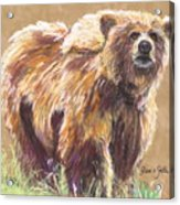 Healthy Brown Bear Acrylic Print