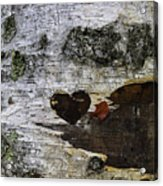 Heart Carved In Tree Acrylic Print