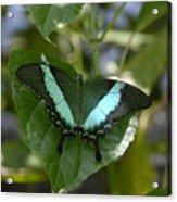 Heart Leaf Butterfly Acrylic Print