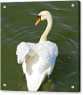 Heart Of A Swan Acrylic Print
