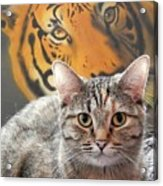 Heart Of A Tiger Acrylic Print