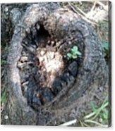 Heart Of A Tree  Acrylic Print