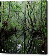 Heart Of The Swamp Acrylic Print