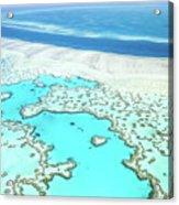 Heart Reef Acrylic Print