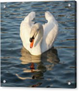 Heart Shaped Pride And Grace Acrylic Print