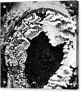 Heart Toadstool Acrylic Print