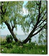 Heart Tree On Lake Saint Clair Acrylic Print