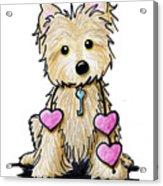 Heartstrings Cairn Terrier Acrylic Print