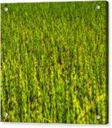 Heather Lake Grass 2 Acrylic Print