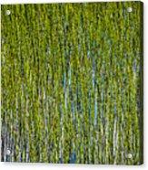 Heather Lake Grass Acrylic Print