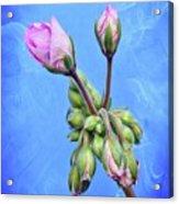 Nature Botanical Floral Pink Flowers Geranium Blooms  Acrylic Print